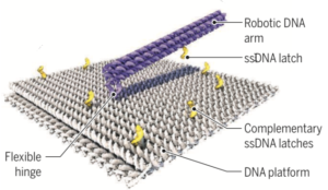 German researchers created a 55-nm-by-55-nm DNA-based molecular platform with a 25-nm-long robotic arm that can be actuated with externally applied electrical fields, under computer control. (credit: Enzo Kopperger et al./Science)